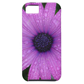 Purple Daisy with Raindrops Case For The iPhone 5