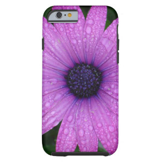 Purple Daisy with Raindrops Tough iPhone 6 Case