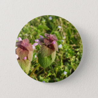 Purple Dead-nettle ( Lamium purpureum ) on green 2 Inch Round Button