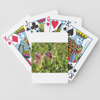 Purple Dead-nettle ( Lamium purpureum ) on green Bicycle Playing Cards