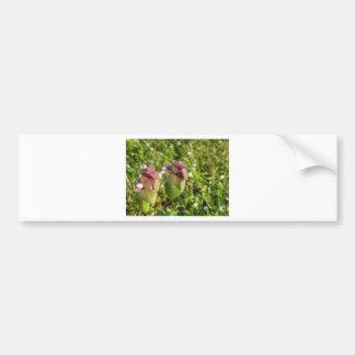 Purple Dead-nettle ( Lamium purpureum ) on green Bumper Sticker