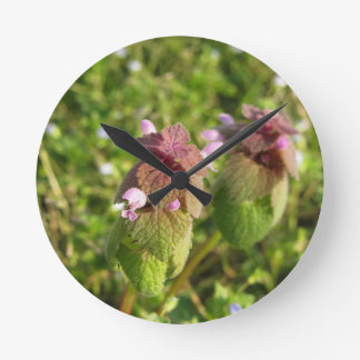 Purple Dead-nettle ( Lamium purpureum ) on green Clocks