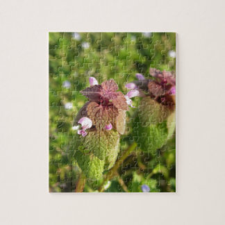 Purple Dead-nettle ( Lamium purpureum ) on green Jigsaw Puzzle