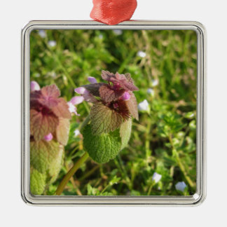 Purple Dead-nettle ( Lamium purpureum ) on green Metal Ornament