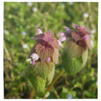 Purple Dead-nettle ( Lamium purpureum ) on green Napkin