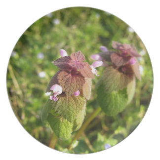 Purple Dead-nettle ( Lamium purpureum ) on green Party Plates