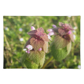 Purple Dead-nettle ( Lamium purpureum ) on green Placemat
