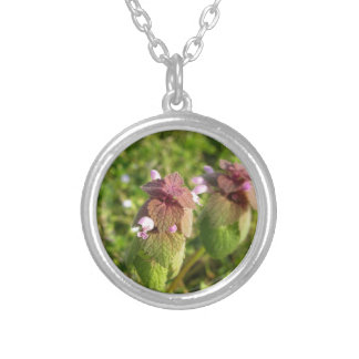 Purple Dead-nettle ( Lamium purpureum ) on green Silver Plated Necklace