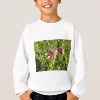 Purple Dead-nettle ( Lamium purpureum ) on green Sweatshirt