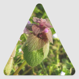 Purple Dead-nettle ( Lamium purpureum ) on green Triangle Sticker