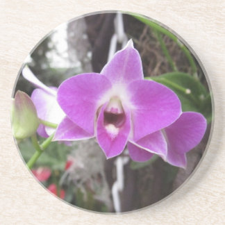 Purple Dendrobium Orchid Coaster