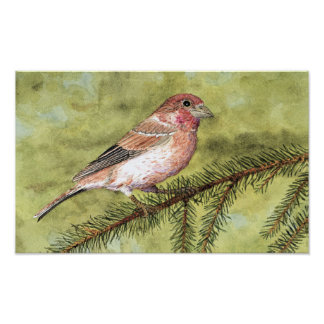 Purple Finch Art Poster