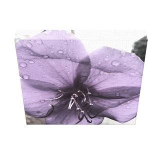 Purple Flower After a Rainstorm Canvas Print