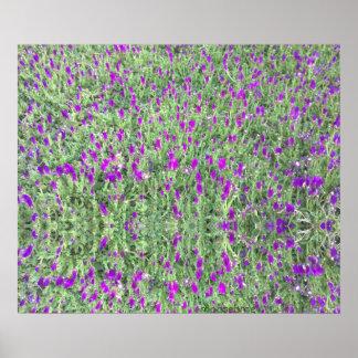 Purple Flower Patch 24x20 Reflection Print