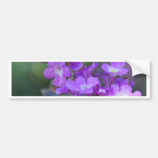 Purple Flowers Bumper Sticker