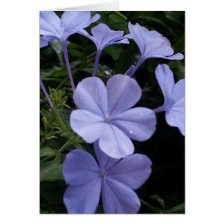 Purple Flowers Note Card