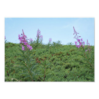 Purple Flowers - photo print