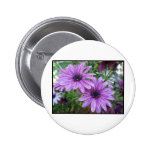 Purple Flowers Picture! Pins