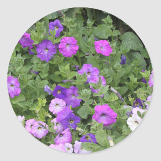 Purple Flowers Spring Garden Theme Petunia Floral Classic Round Sticker