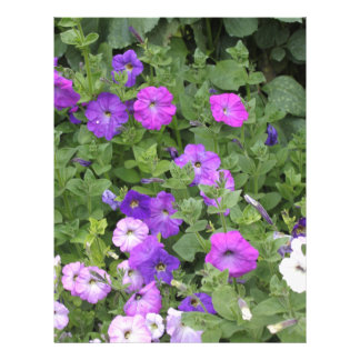 Purple Flowers Spring Garden Theme Petunia Floral Letterhead