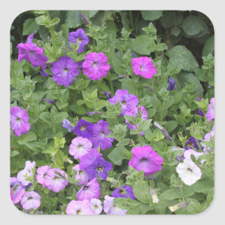 Purple Flowers Spring Garden Theme Petunia Floral Square Sticker