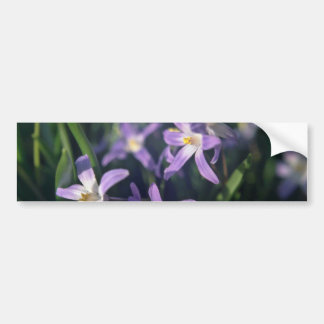 Purple Flowers With White Centers flowers Bumper Sticker
