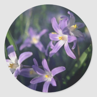 Purple Flowers With White Centers flowers Round Sticker