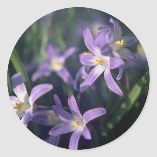 Purple Flowers With White Centers flowers Round Stickers