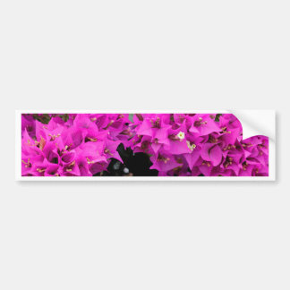 Purple Fuchsia Bougainvillea Background Bumper Sticker