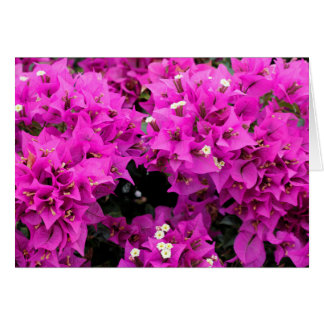 Purple Fuchsia Bougainvillea Background Card