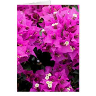 Purple Fuchsia Bougainvillea Background Card
