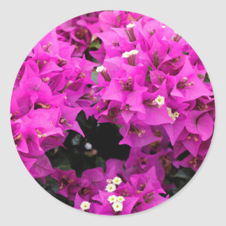 Purple Fuchsia Bougainvillea Background Classic Round Sticker