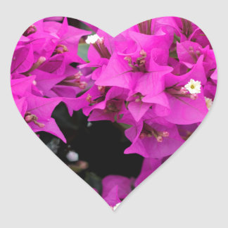 Purple Fuchsia Bougainvillea Background Heart Sticker