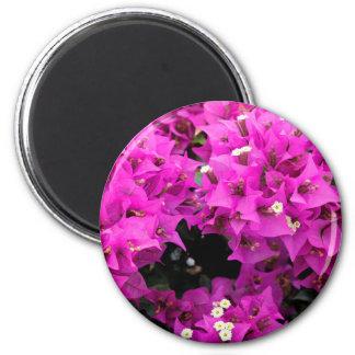 Purple Fuchsia Bougainvillea Background Magnet