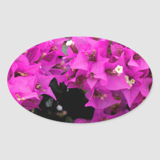 Purple Fuchsia Bougainvillea Background Oval Sticker