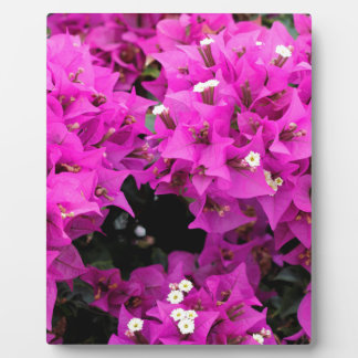Purple Fuchsia Bougainvillea Background Plaque