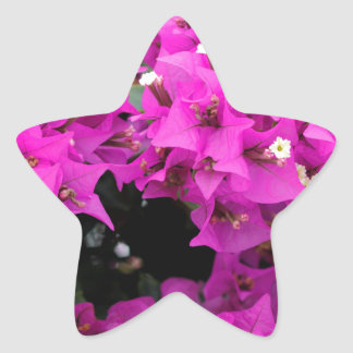 Purple Fuchsia Bougainvillea Background Star Sticker