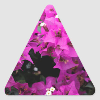 Purple Fuchsia Bougainvillea Background Triangle Sticker