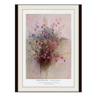 Purple Gerardia Botanical Wildflower Postcard