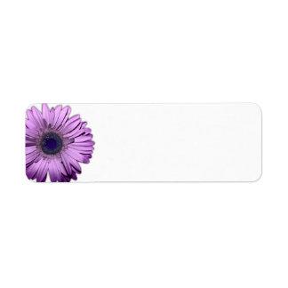 Purple Gerbera Daisy Blank