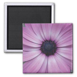 Purple Gerbera Daisy Flower Fridge Magnet Sqaure