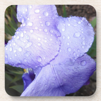 Purple German Iris With Some Raindrops Coaster