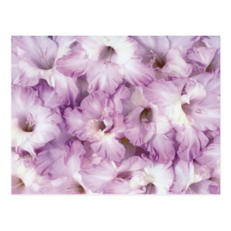 Purple Glads All Occasion Postcard