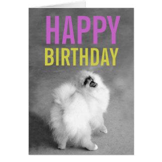 Purple & Green Pomeranian Happy Birthday Card