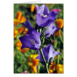 Purple  Harebells and California Poppies in Alaska Greeting Card