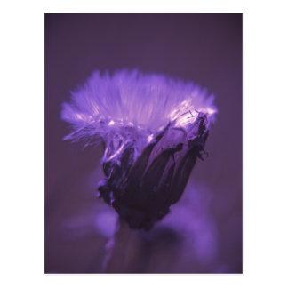 Purple haze postcard