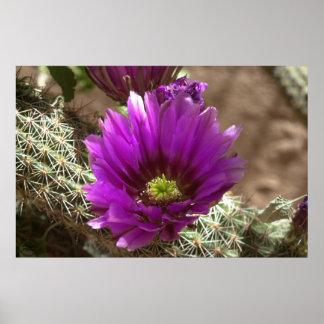 Purple Hedgehog Poster
