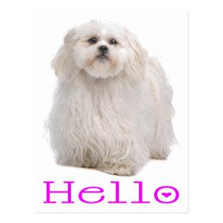 Purple Hello Cream Shih Tzu Puppy Dog Postcard