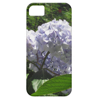 Purple Hydrangea flowers (Hydrangea macrophylla) iPhone 5 Cases