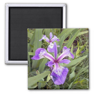 Purple Iris 2 Magnet